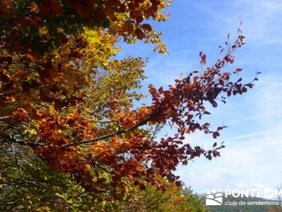 Senderismo joven Madrid, Parque Natural del Hayedo de Tejera Negra; rutas senderismo cerca de madrid